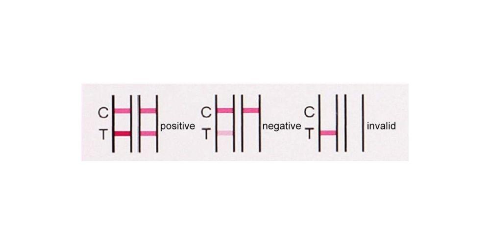 Imagen resultado test embarazo positivo negativo control